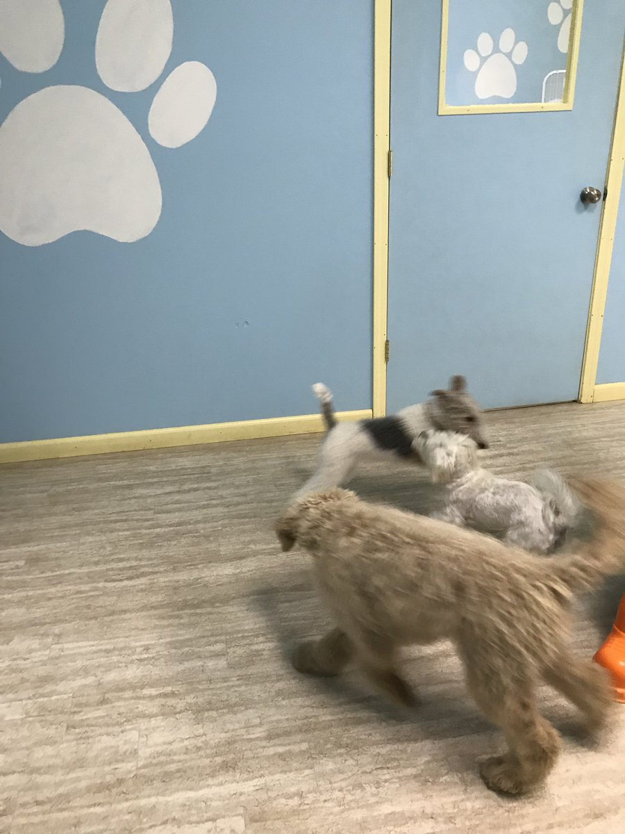 Haley, Cooper D. and Tucker R. play ring around the rosie