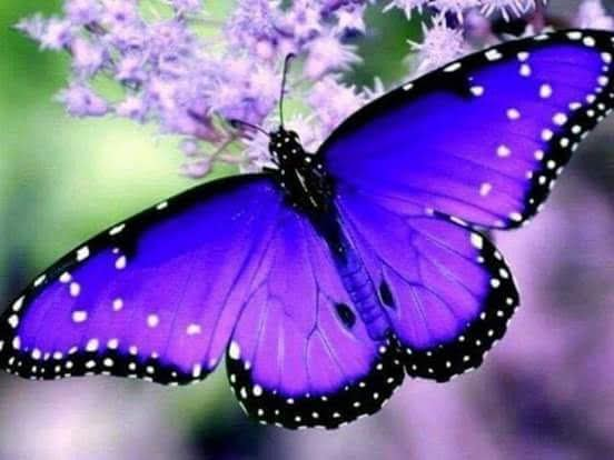Beautiful Butterfly and nature <br>http://pic.twitter.com/Vk5H6K5UVV