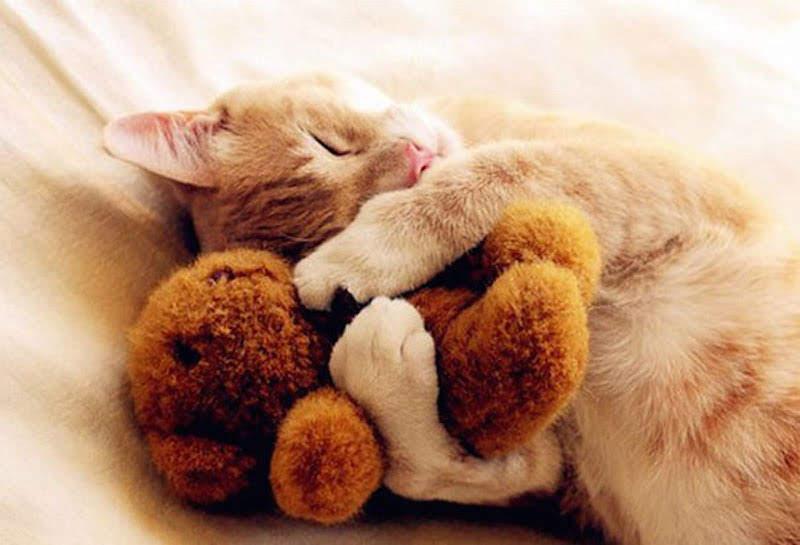 Картинка с добрым утром котики обнимаются