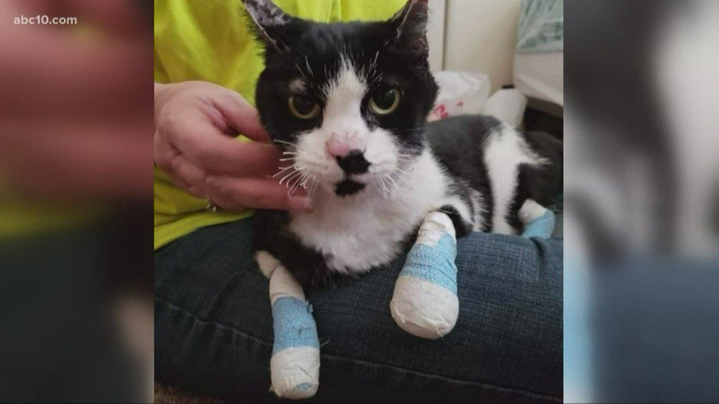Redding family finds pet cat alive weeks after wildfire https://t.co/3AY7N9tAPQ
