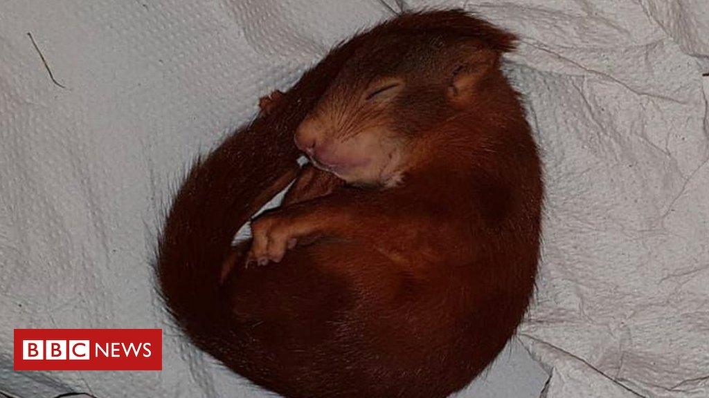 Polícia alemã resgata homem perseguido por filhote de esquilo https://t.co/OiuK7pTiWi