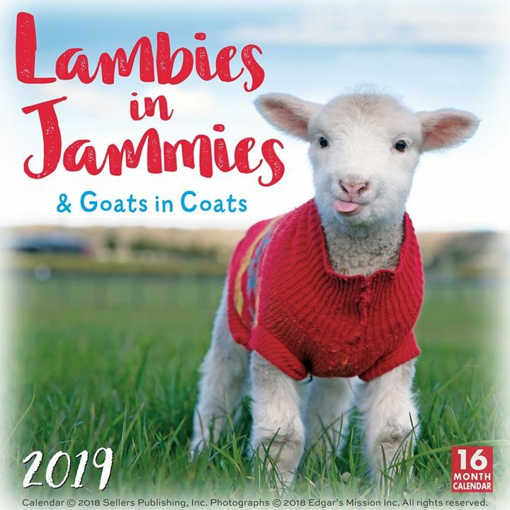 We've partnered w/ Edgars Mission of Lancefield, AU, a non-profit farm sanctuary that provides care to 450+ rescued animals, incl. the little lambs & kids featured in our 2019 Calendar! #2019calendar #lambiesinjammies #goatsincoats #goats #lambs #babygoatcalendar #edgarsmission