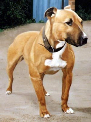 @natalack74 Looked like this dog but black and white colouring.