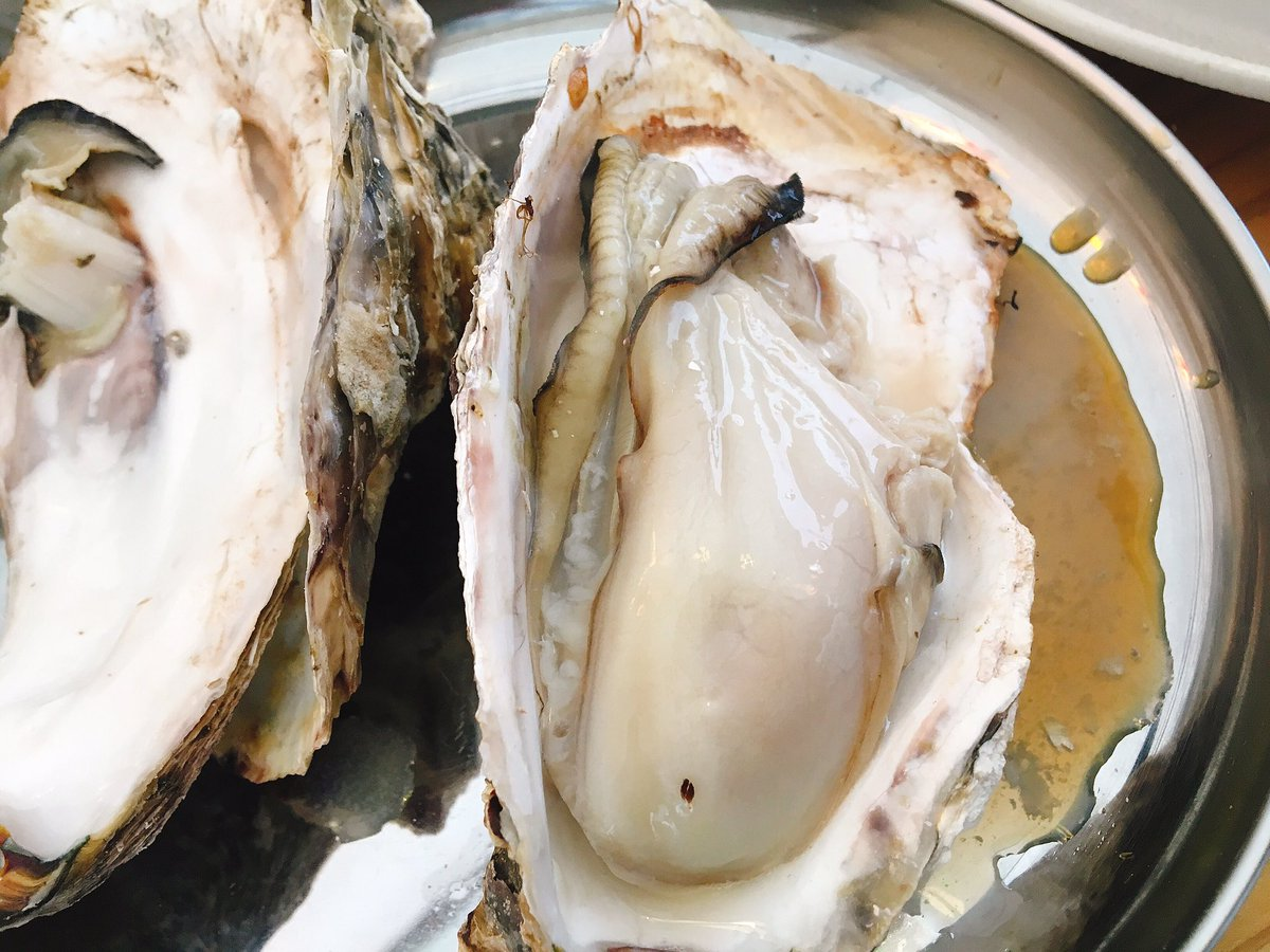 牡蠣 小屋 青島