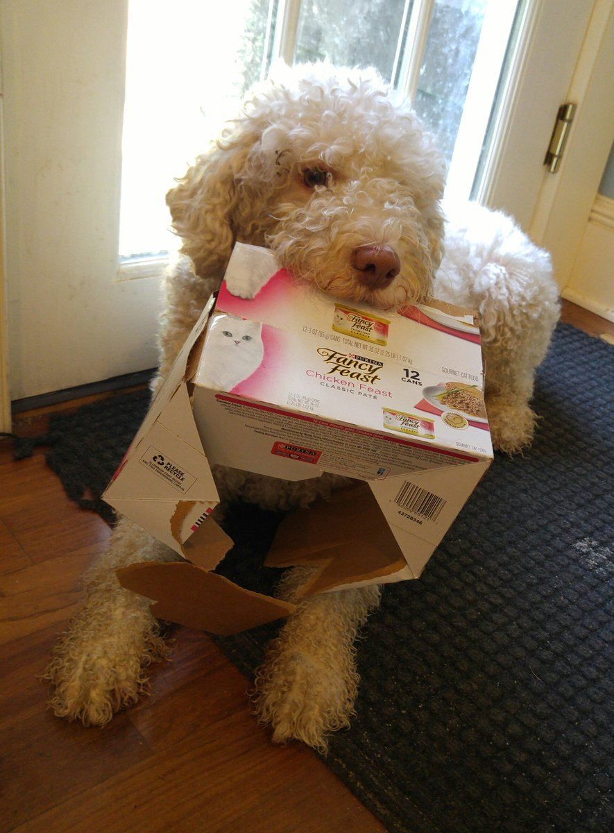Theo&#39;s pup tip of the day: When you are buying groceries, remember to get some nice stuff for the other members of your family. And don&#39;t even make them share. Buying someone else&#39;s favorite goodies is just one more way to say &quot;I Love You.&quot; <br>http://pic.twitter.com/BCstrnFVeR
