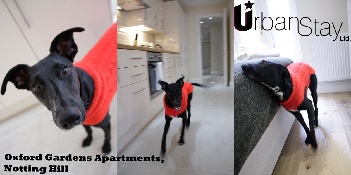 Book pet friendly #ServicedApartments in #London with us! All approved by Maya adopted from @spanishstray! :)  #businesstravel #traveltips<br>http://pic.twitter.com/VPHO6eRHBG