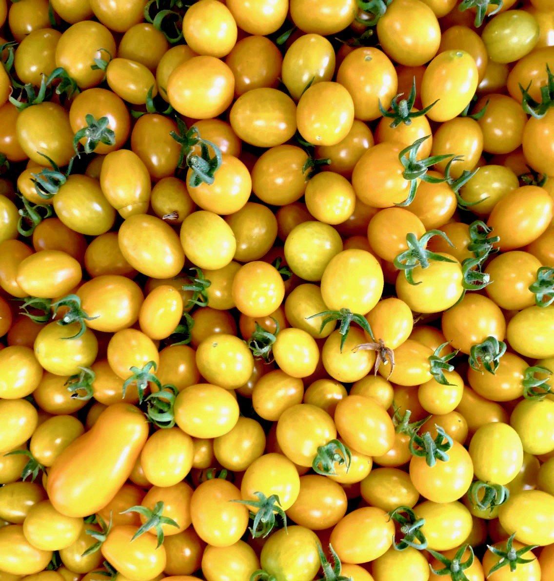 Giallo pomodoro#yellowisthenewblack #simplyisbetter #noicisiamo #mati1909 #pistoia #tuscany #cooking #food #foodblog #foodie #foodlover #foodpic #photooftheday #igersitalia #picoftheday #instadaily #ilovecooking #ilovefood #instafood #country #chic #tomatoes  - Ukustom