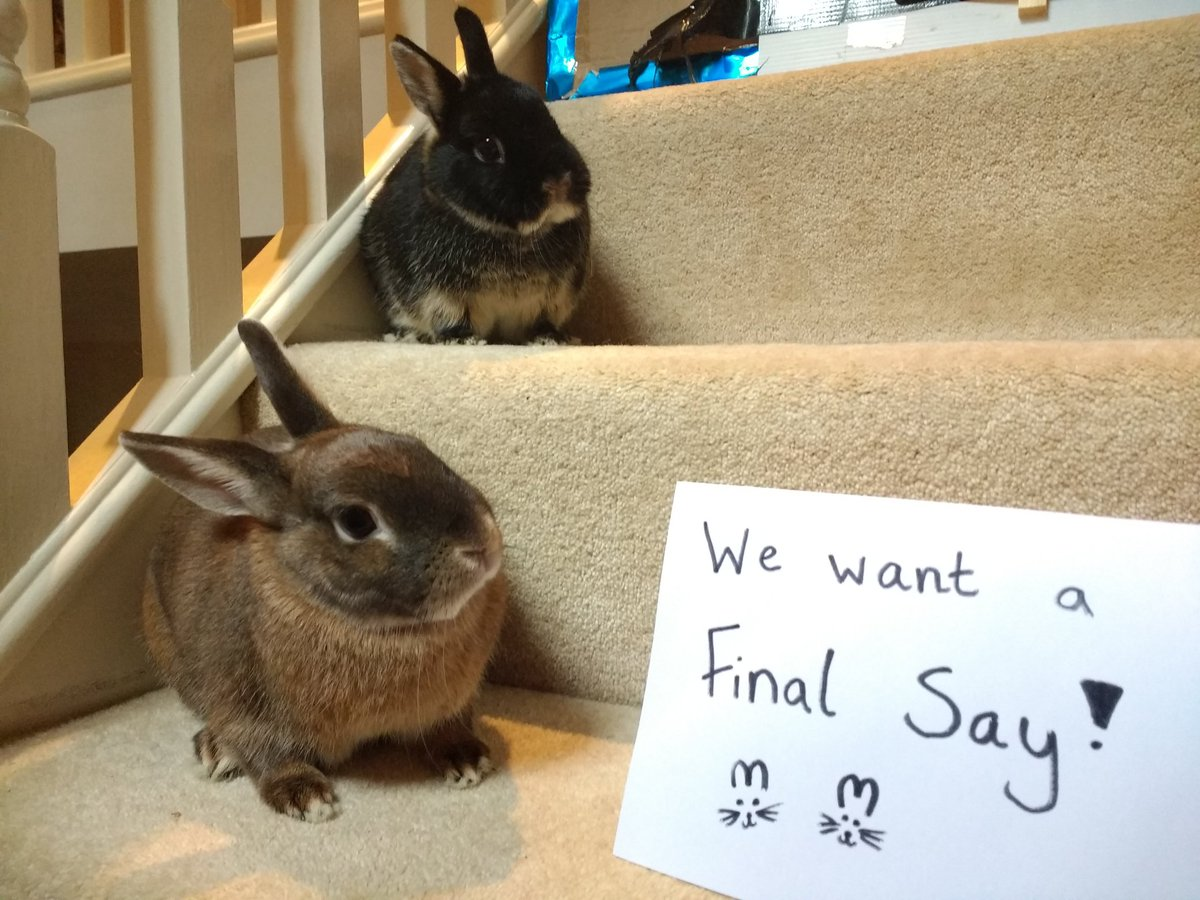 My bunnies want us to have a #FinalSay because Brexit will impact their lives too! Vet shortages and reduced quality in food is bad news for all pets and pet owners! <br>http://pic.twitter.com/Xa3fxkTu66
