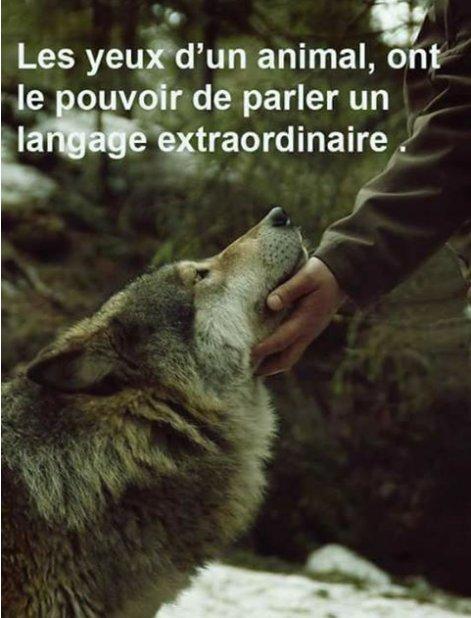 """Résultat de recherche d'images pour """"Empathie des animaux"""""""