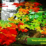 """Image for the Tweet beginning: """"Keep calm and plant a"""