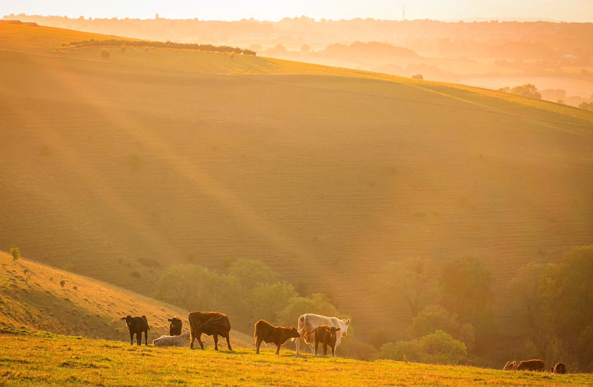 Golden hour scenes in north Dorset, UK #EarthCapture by @Saintsmadmomma<br>http://pic.twitter.com/hADd71AkaH