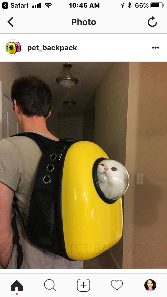 Just spent a half hour checking out the hilarious Instagram feed for the insane (terrifying?) invention  http:// instagram.com/pet_backpack  &nbsp;    I believe most of these cats were unwilling participants.<br>http://pic.twitter.com/vUmwQ8rl08