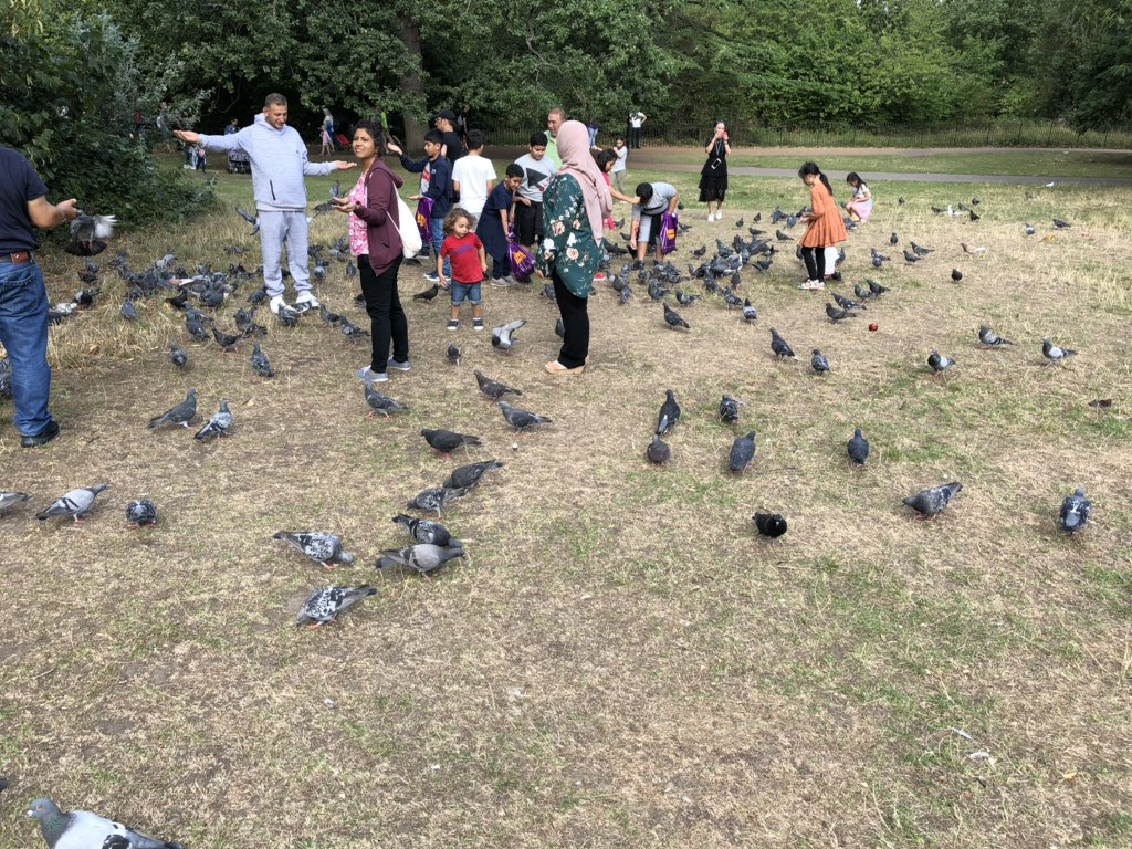 I think the pigeons have figured out that people come here to feed the parakeets https://t.co/diQWPjlu19