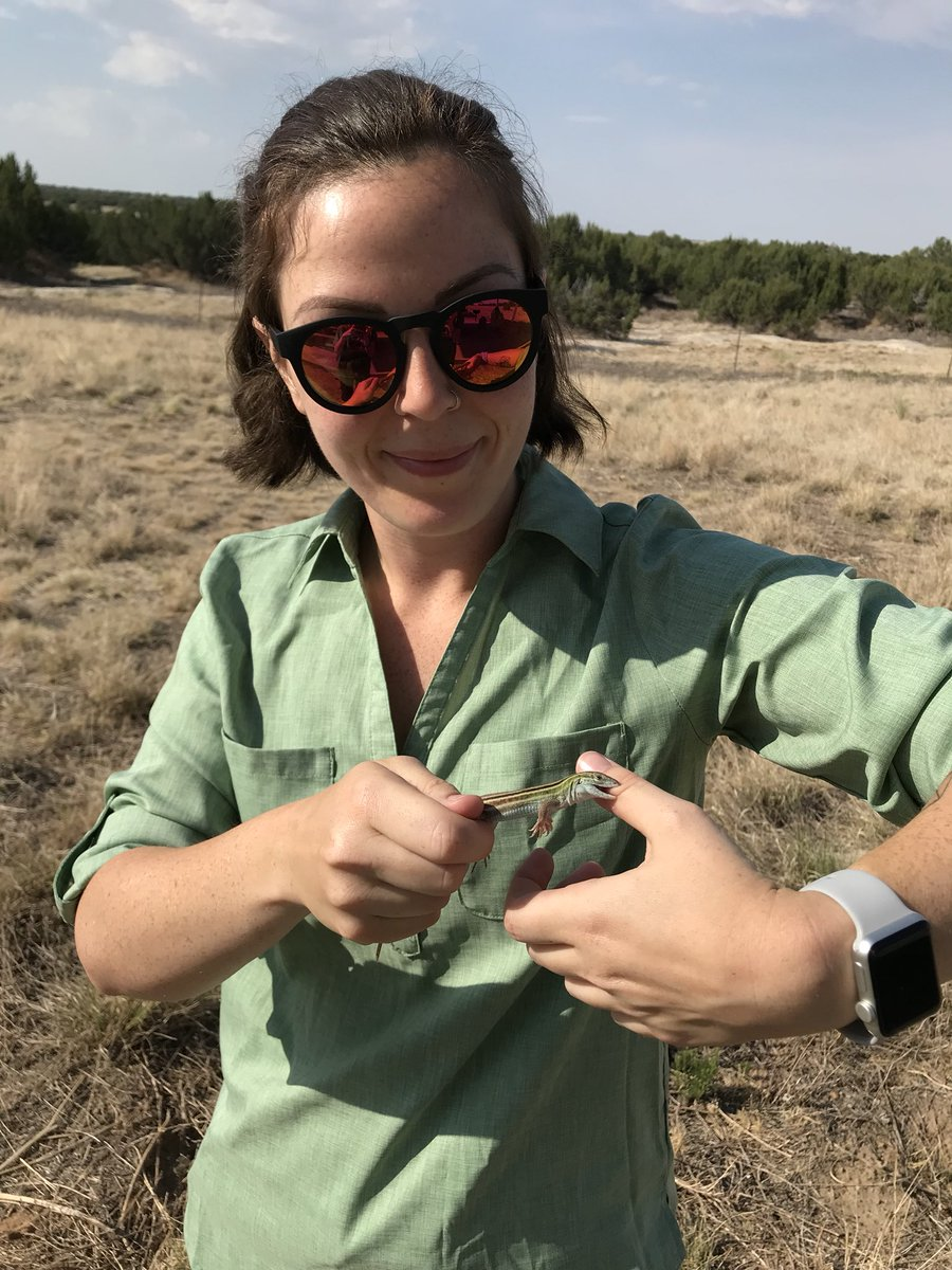 I guess there's no better time for my first tweet than #WorldLizardDay! While I'm an equal opportunity lizard lover, I'll give a special shout-out to my study system, #Aspidoscelis. #womeninSTEM #HERpers #PhDlife #womeninscience #lizardsinscience #whiptaillizard #NSFGRFP<br>http://pic.twitter.com/9uwf4z0vQp
