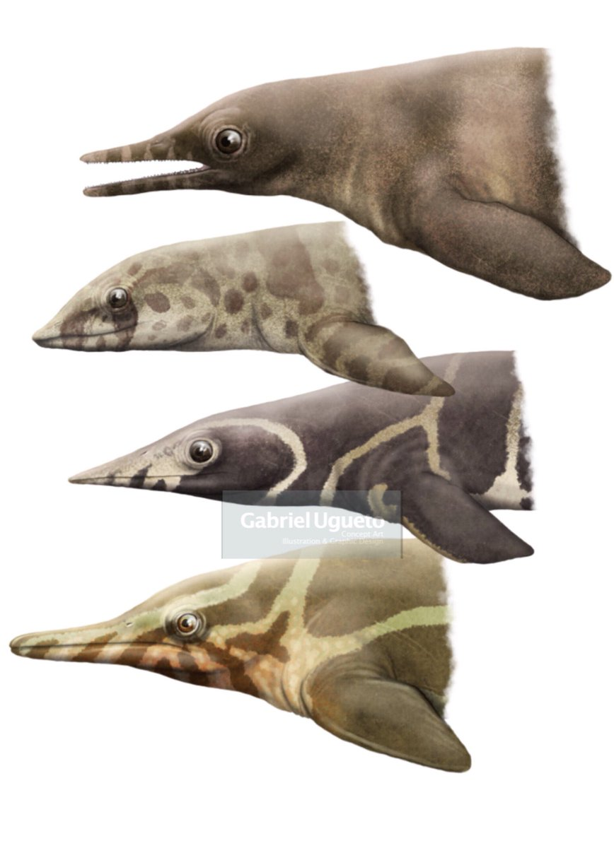 Most of you were right on point! Study of the head and anterior body of four early ichtyosauriforms. From top to bottom: Chaohusaurus, Cartorhynchus, Grippia and Barracudasauroides #paleoart #sciart <br>http://pic.twitter.com/MfGRFF5XAd