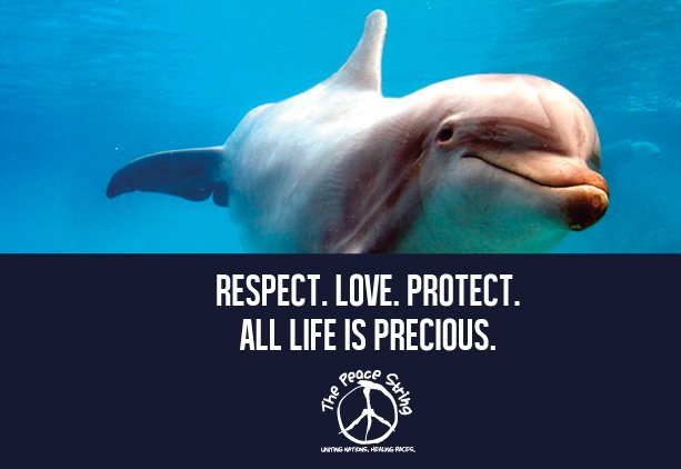 Respect. Love. Protect. All life is precious! #wednesdaythoughts #onelove #peace #unity #blackbutterfly #ImTheHappiestWhen we try. @gary_hensel @MARLOSALZ @Toribridges10<br>http://pic.twitter.com/yD087Dmq9a