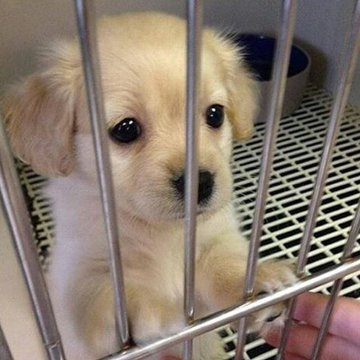 Every puppy deserves a loving home<br>http://pic.twitter.com/8ZP6cJISm0