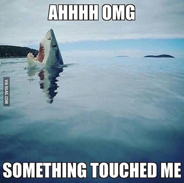 Smart people of twitter... I know y&#39;all love White Sharks.... but does anyone know how long their pregnancy is?  #AskingForAFriend  #SharkScience #AskingForSomeoneWho OnlyKnowsSkates<br>http://pic.twitter.com/ni3EeoDIP9