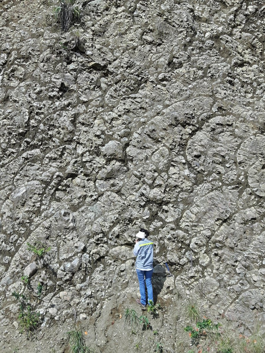 Pillow lavas of the Caribbean oceanic plateau - not too bad looking considering they are 90 million years old, accreted and exhumed in the northern Andes of Colombia! <br>http://pic.twitter.com/oVAuAk9GKG