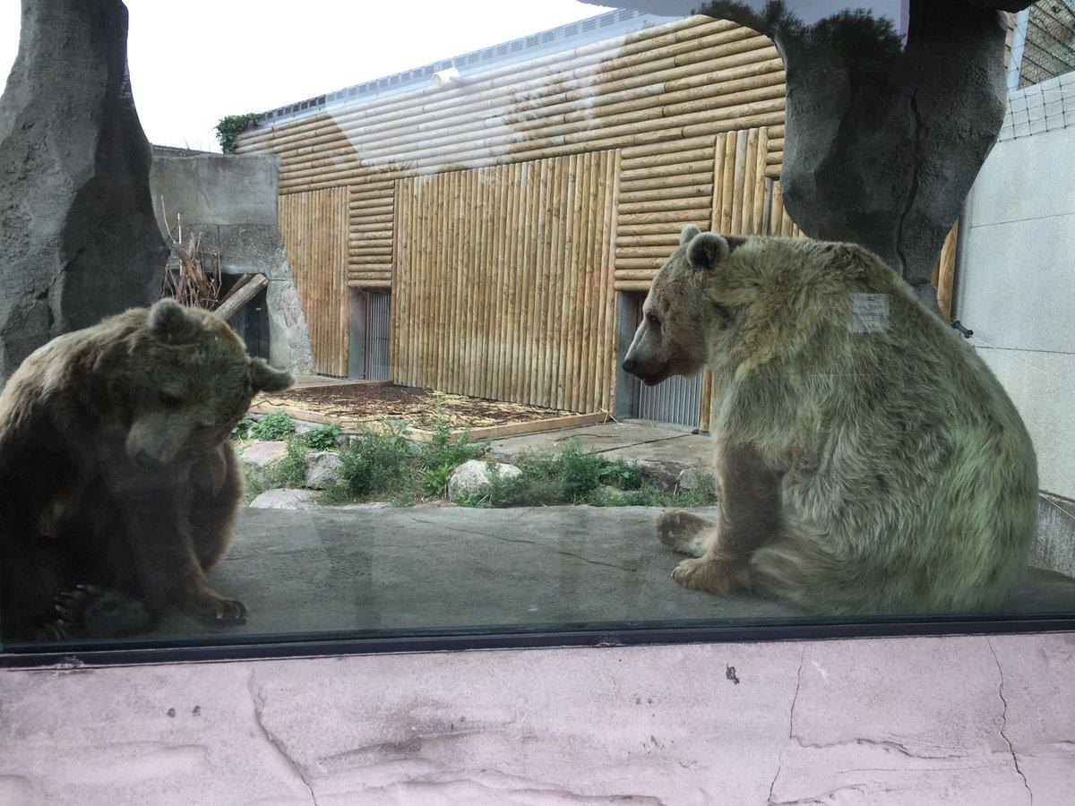 Bonjour @P_Vergriete, Maire de @Dunkerqueetvous, Votre slogan «Je n'ai pas choisi d'être dunkerquois, j'ai juste eu de la chance», ça vaut pour les 2 ours du zoo ? Je propose aimablement, pour eux, de le changer par «Je n'ai pas choisi d'être dunkerquois, j'ai eu une poisse de merde»