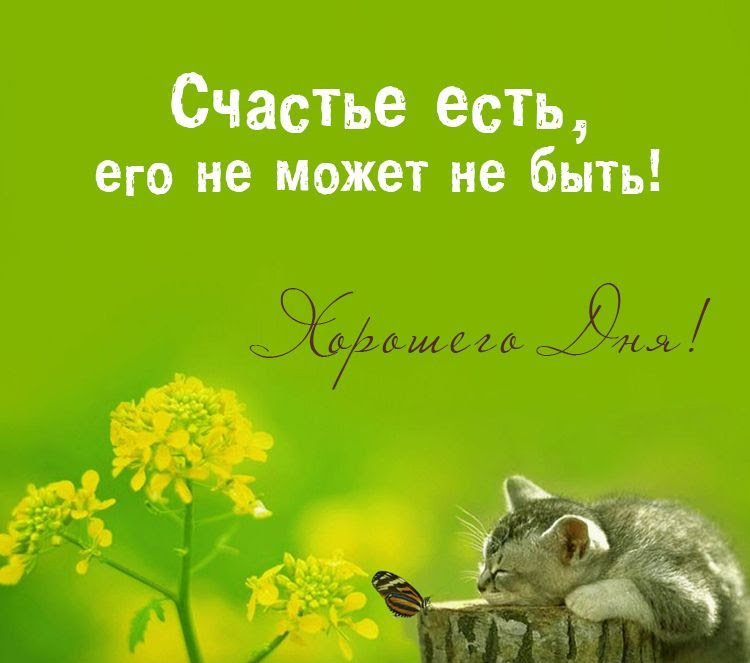 Хорошего дня и отличного настроения картинки прикольные, прикольные крысами открытки