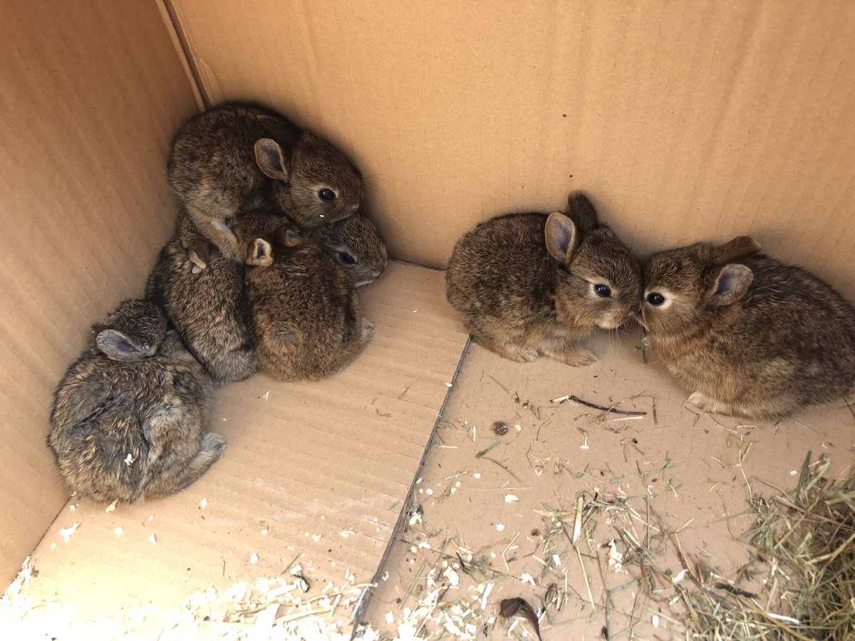 canny believe i looked round the side of my hutch n ma rabbit's went n had 7 weans