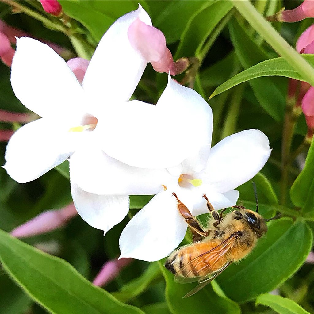 Jasmineflower Hashtag On Twitter