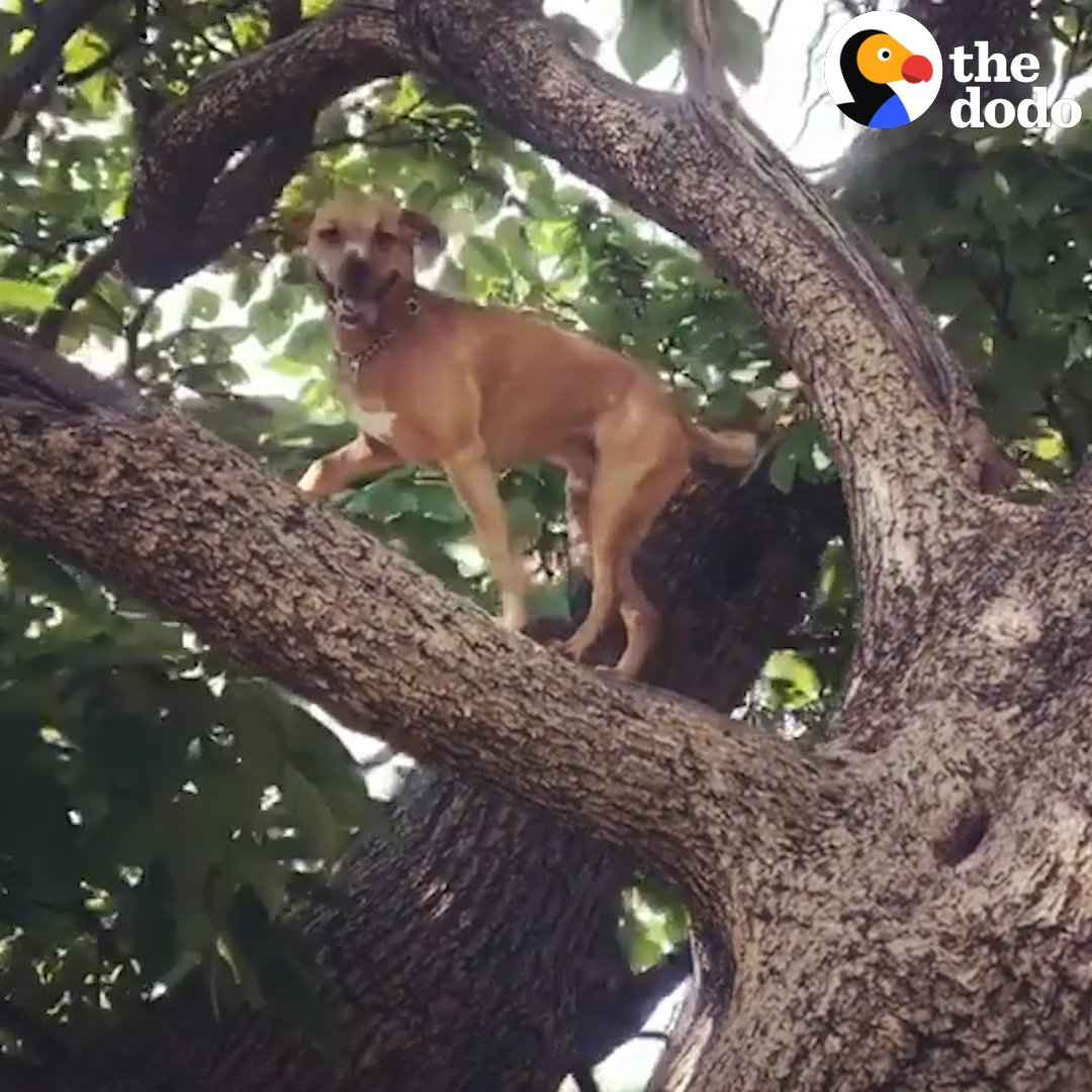 Ringo copes with his anxiety by climbing the tallest trees possible!