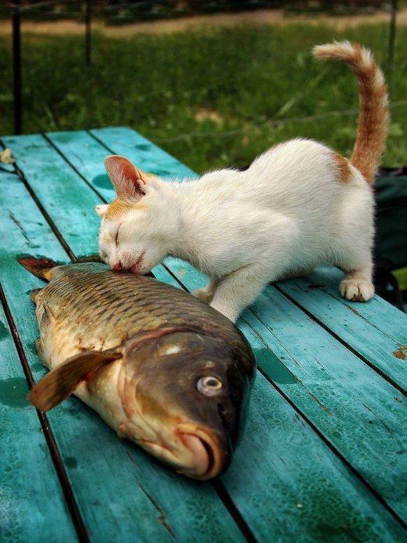 Днем учителя, смешная картинка про рыбу