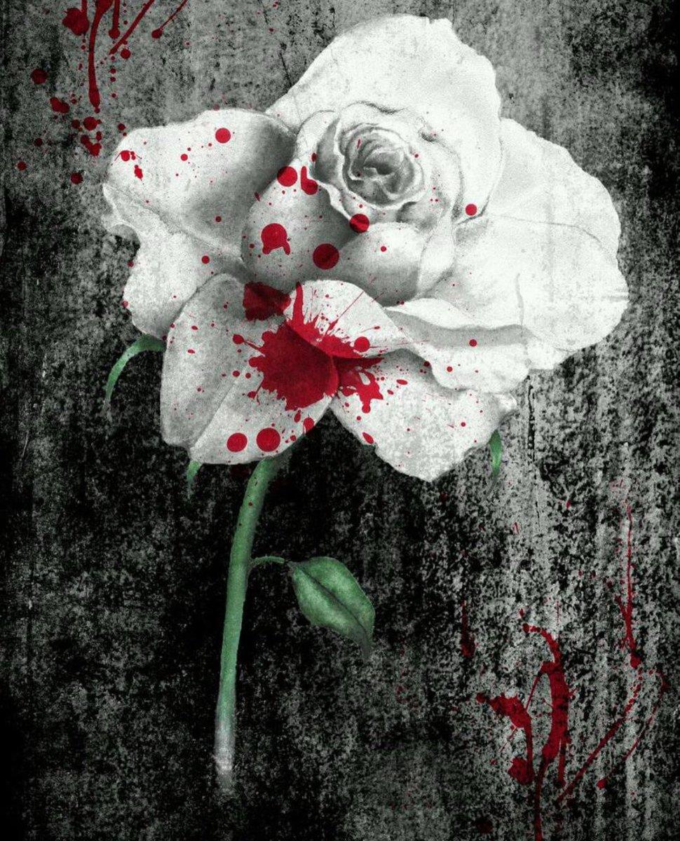 Картинки красные розы с кровью