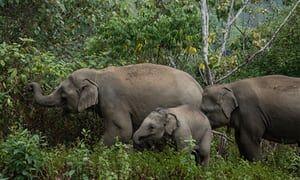 Global Elephants's photo on #thursdaythoughts