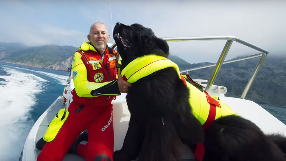 .@IMAX's teaser for #SuperpowerDogs showcases some heroic canines around the world: https://t.co/UjeOjmnfi4 https://t.co/Uk38sJ2wll