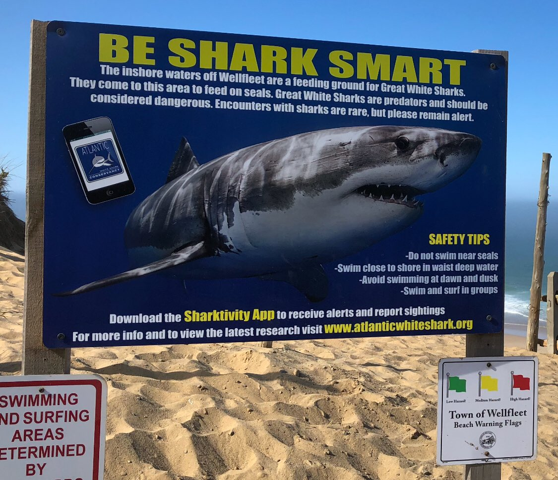 Solid advice regarding #sharks in Cape Cod waters and beyond. 1st safety point on both the older signs and the newer #SharkSmart signs: -Do Not Swim Near Seals. ...followed by: -Swim close to shore in waist deep water -Avoid swimming at dawn or dusk -Swim &amp; Surf in groups<br>http://pic.twitter.com/cQaXhJAyh2