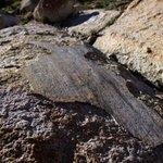 YosemiteNPS