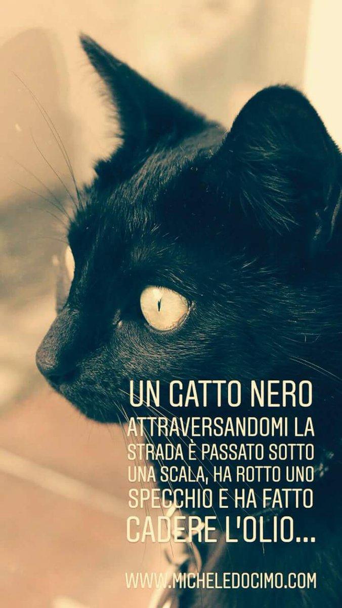 Michele Nemecsek Docimo On Twitter Un Gatto Nero Attraversandomi