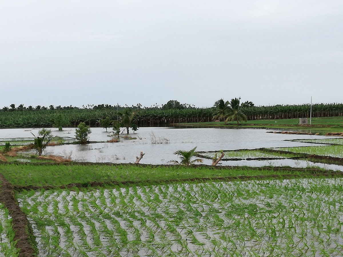 Flood alert for 11 districts of TN!