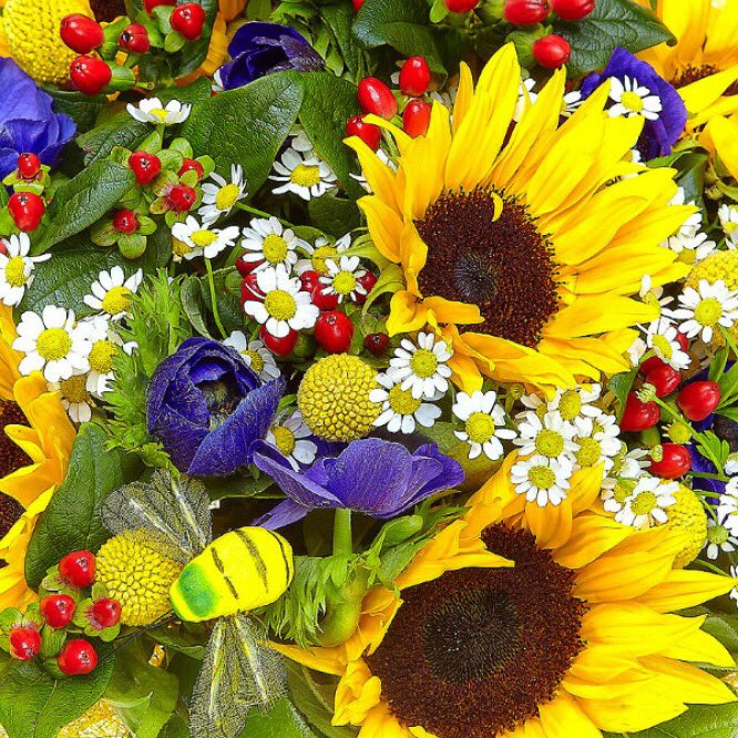 картинки полевые цветы и подсолнухи профилактическая