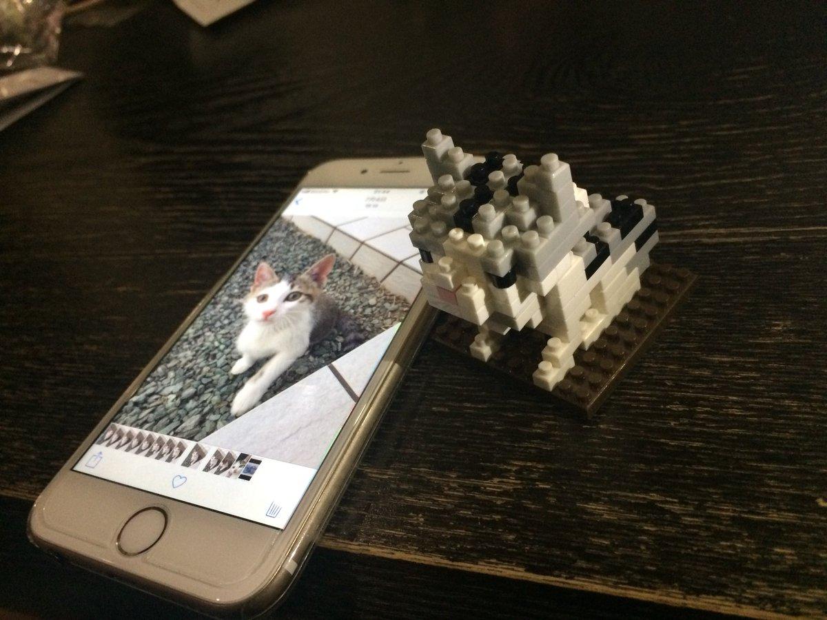 test ツイッターメディア - うちの猫 ちぃ を、#ダイソー の #ブロック で作ってみた(o^^o) https://t.co/C2m5AQta9U