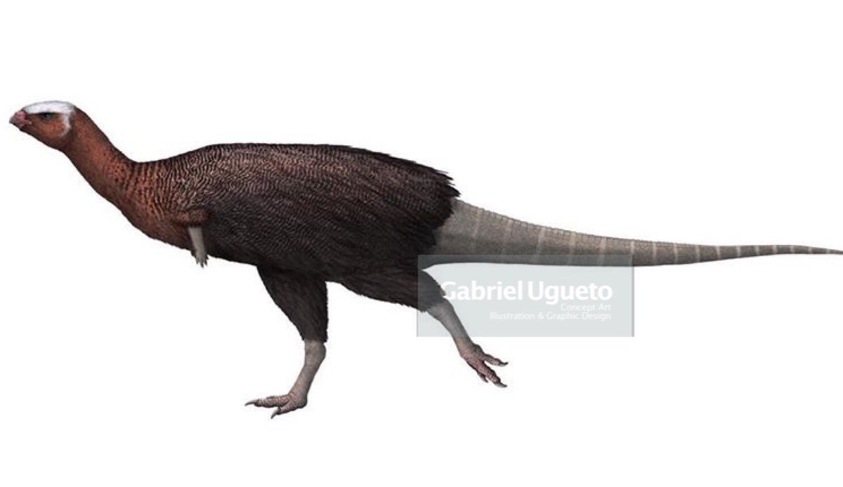 For this #FossilFriday My reconstructions of small ornithischians, particularly relatively early taxa, show them as very fluffy animals. Actually after my recent conversations with @Dave_Hone some have gotten even fluffier! #paleoart #sciart #dinosaurs<br>http://pic.twitter.com/g4itHVe3aa