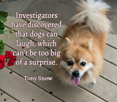 Investigators have discovered that dogs can laugh, which can't be too big of a surprise.—Tony Snow #quote <br>http://pic.twitter.com/KJ5P9ypvHZ