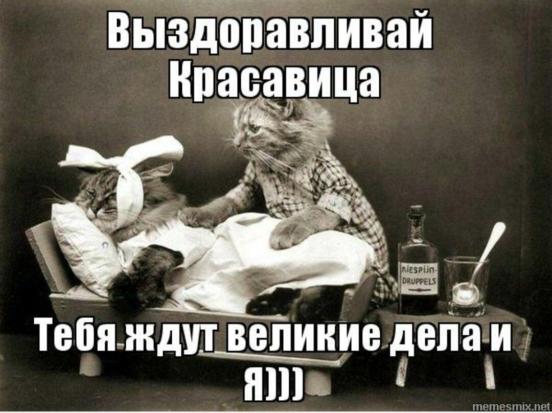 Смешные картинки давай выздоравливай