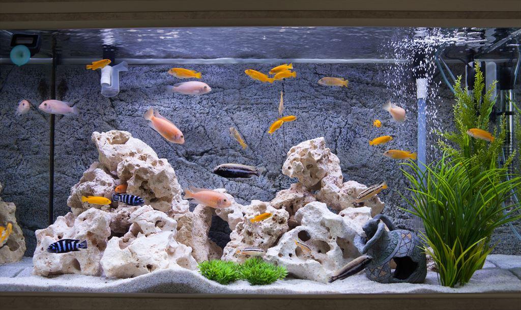 Do Zasadzenia Roślinek W Nowym Akwarium Wystarczą Doniczki
