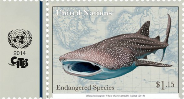 Cites On Twitter It S Internationalwhalesharkday Whale Sharks Are Protected Under Cites Appendix Ii Since 2003 To Ensure That Int L Trade In Whaleshark Is Legal Sustainable Traceable Saveourocean Sdg14 Marinespecies Sdgs Https T Co