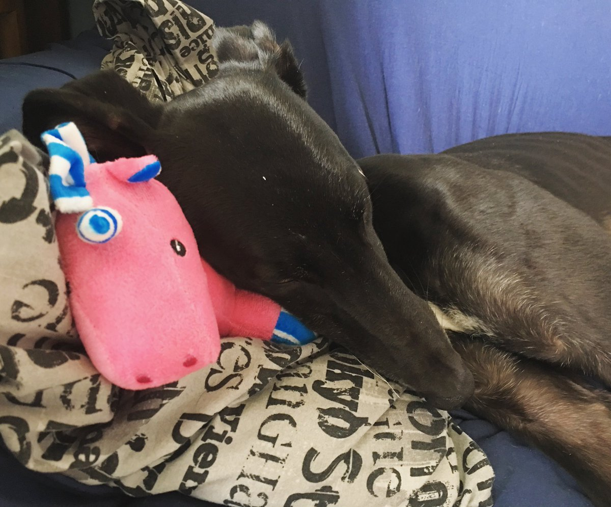 Dixie - The unicorn we won from @Pet_Connection arrived! He's a great snuggle buddy.