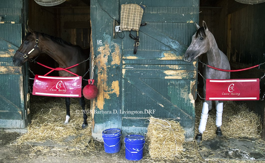 WONDER GADOT (left) and Spinaway contender CATHERINETHEGREAT, who most recently won the G3 Schuylerville, looking for mint-bearers this morning at the @markecasse barn in Saratoga.<br>http://pic.twitter.com/mEVeWH1Y0A