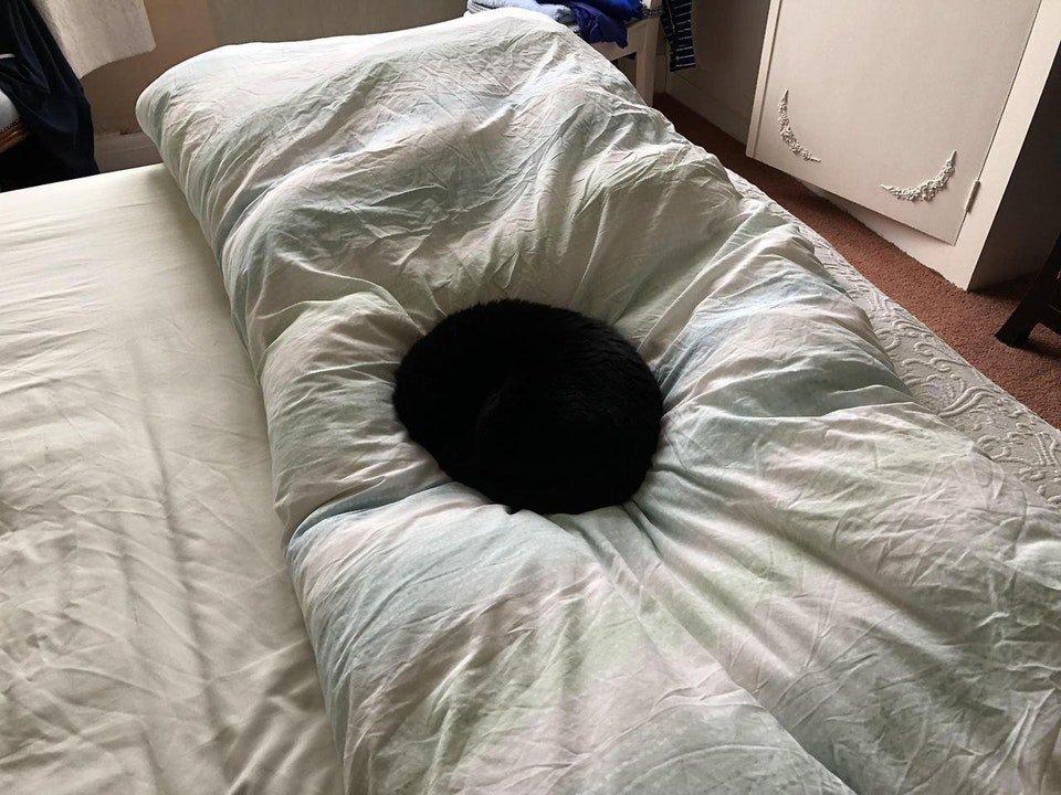 みんなして「猫は液体だ」なんて言うもんだから、ついに窪みに溜まった墨汁になってしまったようだ。それでもちゃんと猫に見えるのはすごいな。