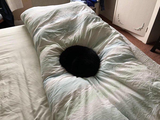 布団にブラックホールが出現!ベンタブラックみたいに真っ黒な猫