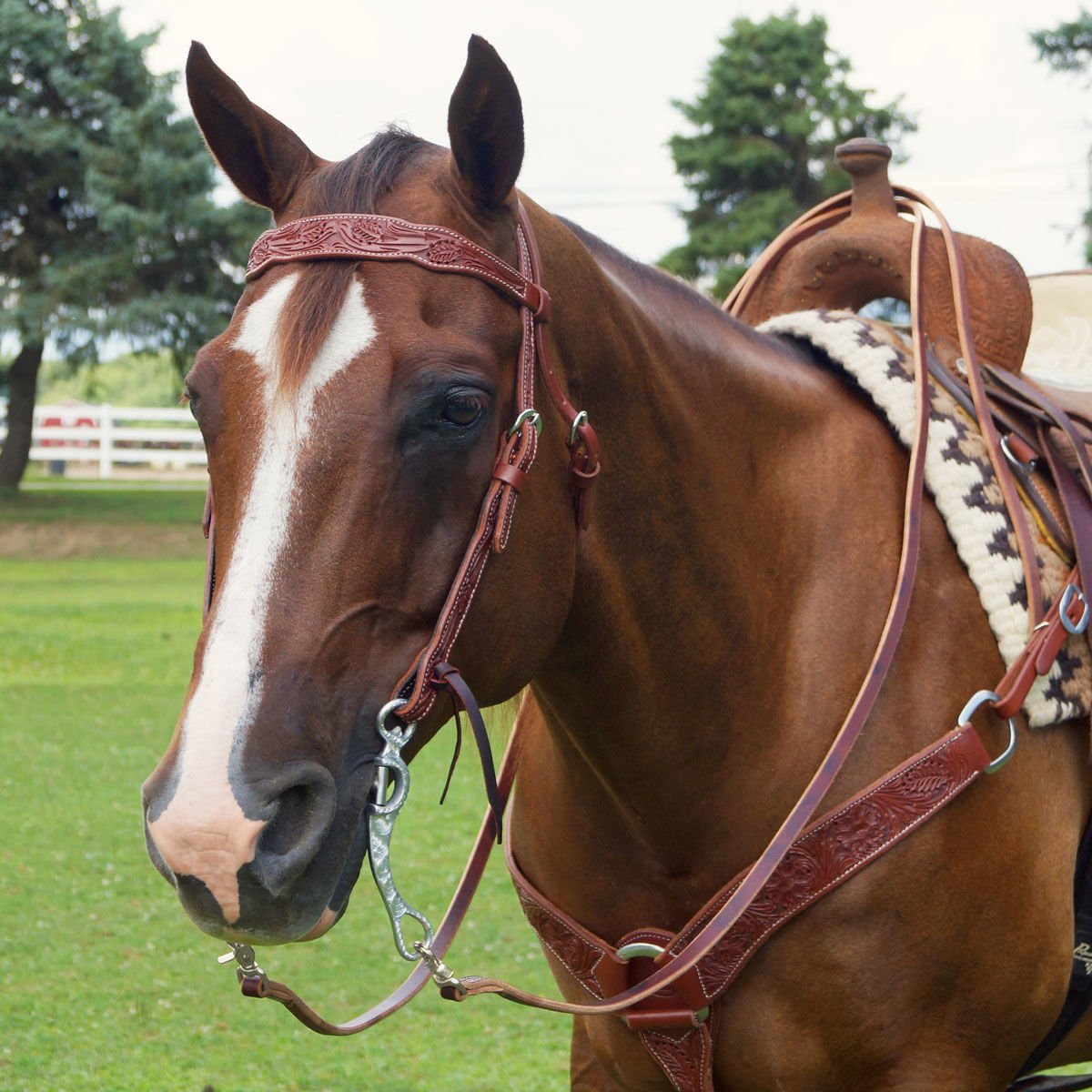 Big Dee S Tack On Twitter Check Out The Supple Sturdy Cactus Saddlery Headstalls Breastcollars And Nosebands Shop Cactus Saddlery Here Https T Co Y8xciqekiz Bigdeestack Cactussaddlery Leathertack Qualityhorsetack Https T Co Yz5y5fdw8d