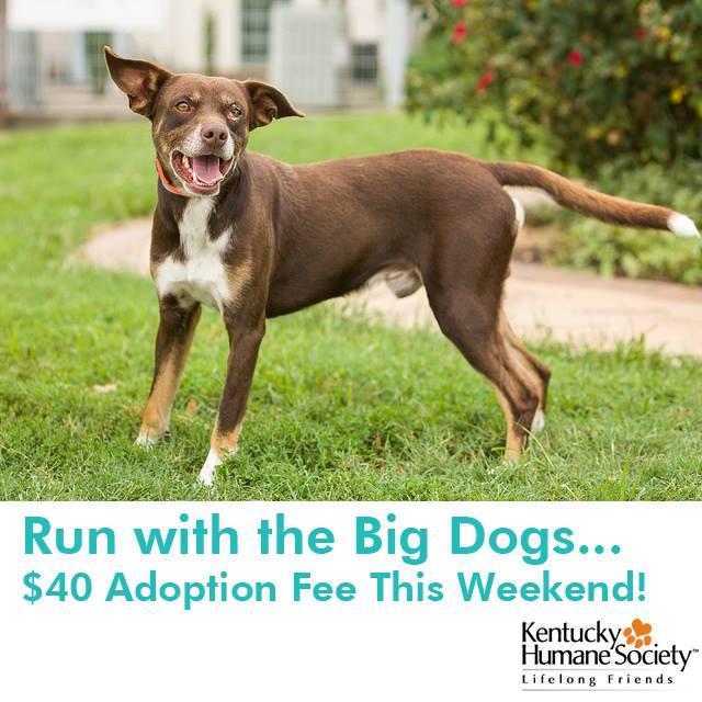 animal adoption sites
