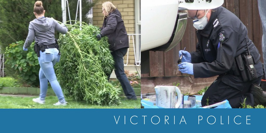 Image result for victoria police and cannabis